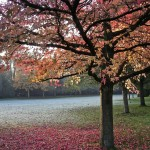 photo of a park, autumn leaves, trees